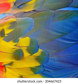Multicolored bird feathers, Scarlet Macaw feathers texture background