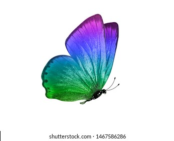 multicolored butterfly for design. isolated on white background