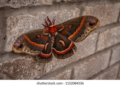 Multi-colored butterfly on brick wall