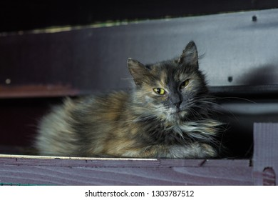 a multi-colored cat sits on a shelf in a cage in an animal shelter