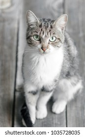 Multi-Colored Cat Sitting And Looking, wood background