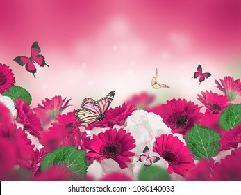 Multicolored chrysanthemums on a flower background. Flowers in design.