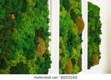 multicolored decorative stabilized moss as wall decor in interior design, side perspective