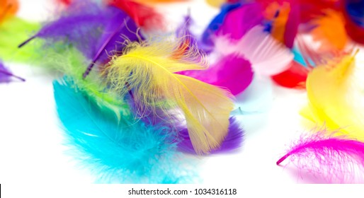 Multi-colored feathers on a white background