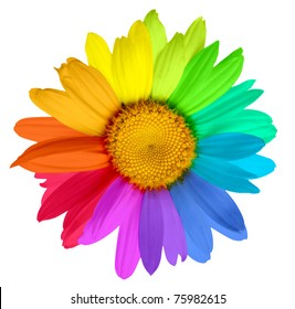 multicolored flower