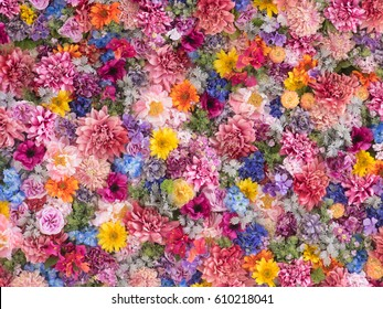 Multicolored flower wall background