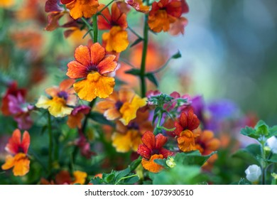 Multicolored flowers with bokeh