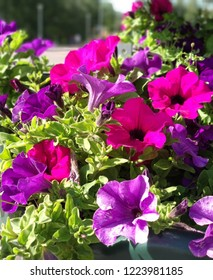 Multicolored flowers on a sunny day
