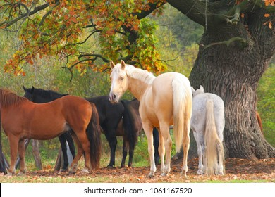 Multicolored horses in front of old oak