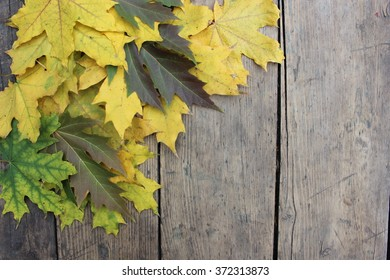 Multi-colored maple autumn leaves on a wooden board
