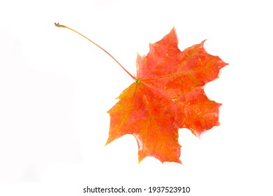 Multicolored maple leaves autumn background. Yellow red colors