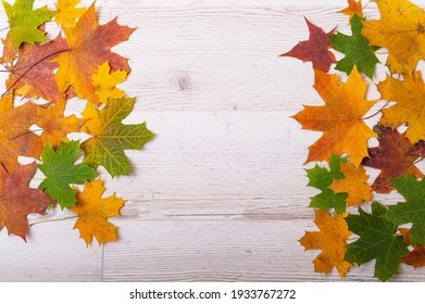 Multicolored maple leaves on a wooden background. Copy space