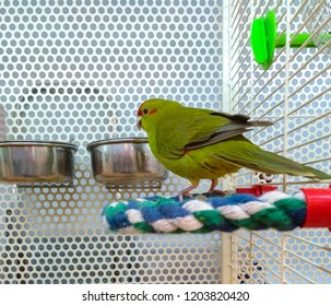 A multi-colored parrot in a cage next to the metal feeders sits on a colored perch - cord
