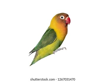 multicolored parrot isolated on a white background