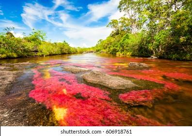 Multicolored river in Colombia, Cano Cristales