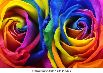 Multicolored rose flowers bouquet : rainbow flowers for beautiful background