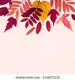 Multicolored set autumn leaves on pink pastel background. Hello Autumn concept.
