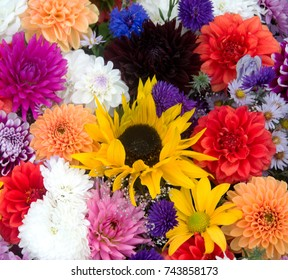 Multicolored spring flowers, closeup. Bunch of colorful flowers or flower bouquet with various flowers.