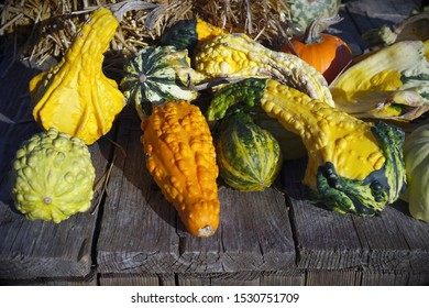 multicolored squashes variety harvest farm vegetables market
