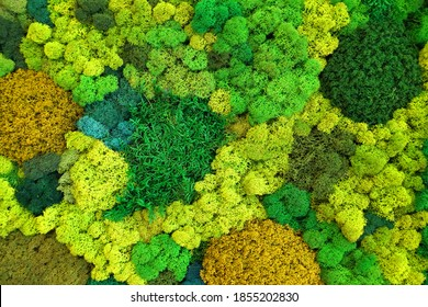 multicolored stabilized moss for ecological interior design close-up, vertical gardening