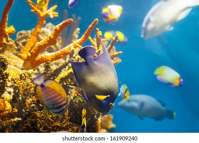 Multicolored tropical fish at coral reef in sea water