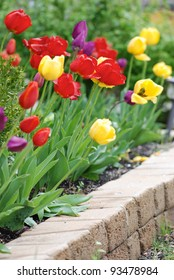 Multicolored tulips in a landscaped garden