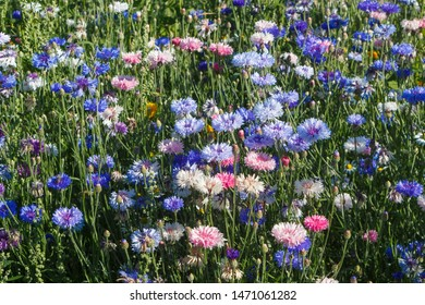 Multicolored variations flowers in a field during summer