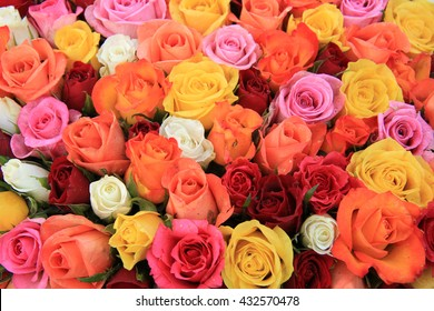 Multicolored wedding roses: a mix of orange, red, pink and white