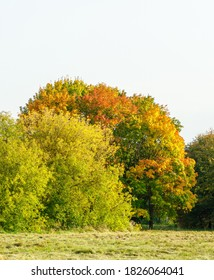 Multicolred yellow red green bright trees leaves composition with blue sky in background