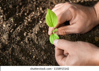 Multicultural hands of adult and children holding young plant over green grass background. Earth day environment friendly harmony together spring black and white concept banner.