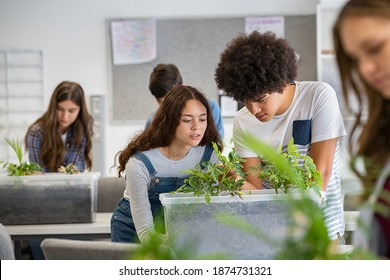 Multiethnic students analyzing plant experiment in school lab. Group of high school students in science laboratory understanding the study of roots. Classmates studying the growth of sprouts.