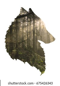 Multi-layer composite of wolf silhouette and a foggy forest scene with sunlight streaming in at upper right.