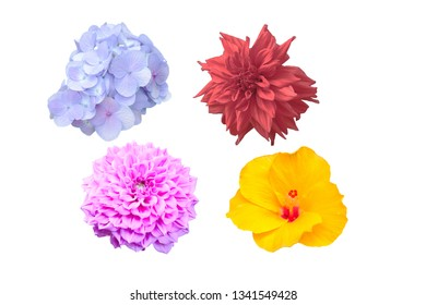 multiple color flower with clipping path on white background