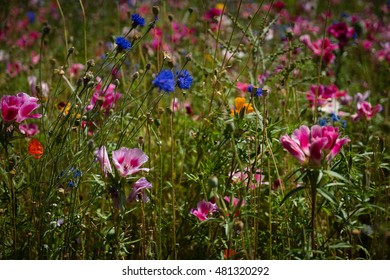 Multiple colored wildflowers in a field