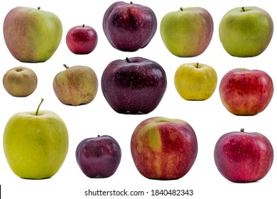 Multiple different apples in a single graphic. No filter, original, natural and organic apples. Multiple colors of fruits.