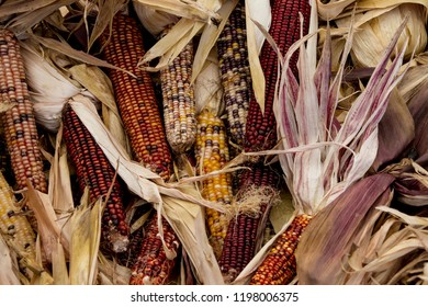 Multiple ears of Indian corn at a Indiana farmers market