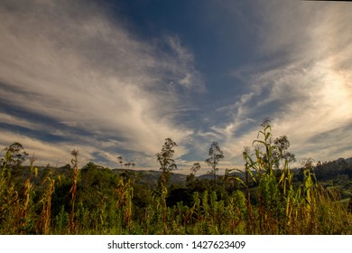 Multiple exposure of a corn crop against the morning sky in the central Andean mountains of Colombia.