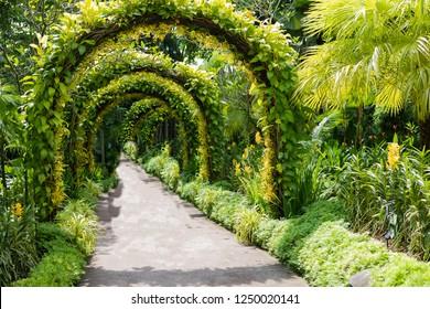 Multiple Green Arched Landscape at Singapore Botanical Gardens