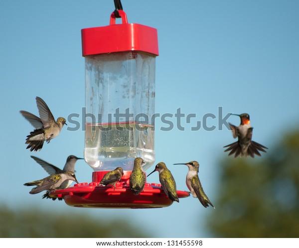multiple-hummingbirds-feeder-some-eating