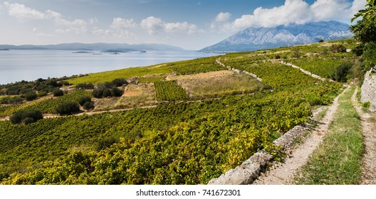 A multiple image panorama looking across the pretty vineyards of Donja Banda and down the Peljesac Channel which divides the Peljesac peninsula with Korcula Island.