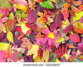 Multiple Kinds of Colorful Fall Leaves on the Ground