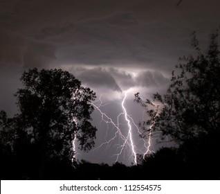 Multiple Lightning Strikes between Trees