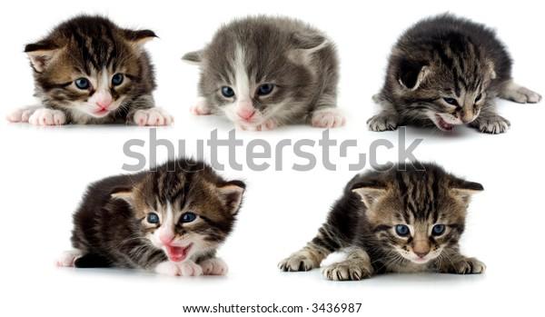 multiple new born kitten on white close up