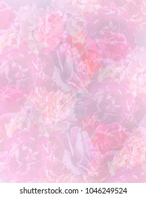 Multiple roses combined into a soft pastel background