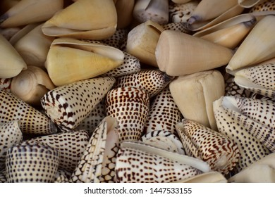 Multi-toned brown and beige seashells