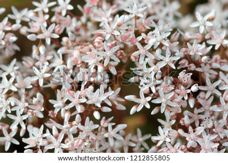Multitude Small Pink White Flowers Wild Stock Photo Edit Now
