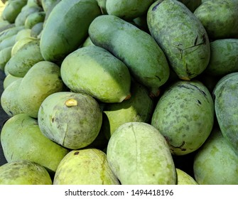 A multitude of stacked green freshly picked pawpaw fruits half in the sunlight and half in the shade