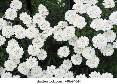 10 Bouquet Fleur Bouquet Fleur Blanche Images Royalty Free Stock
