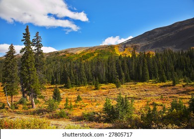 Multy-coloured northern mountain grasses and bushes