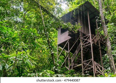 Mulu National Park - Treehouse